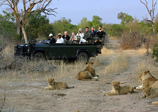 lions-on-safari-game-drive
