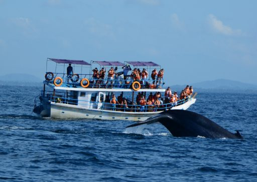 whale-watching-in-mirissa-2-web